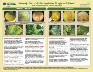 Manejo de las Enfermedades Fungicas Foliares