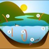 Figure 1. Many processes affect phosphorus levels in a shallow lake.