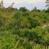Figure 1. An example of a Florida scrub ecosystem. Credit: Lynn Proenza