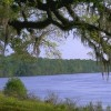Figure 3. A view of the Apalachicola River from Fort Gadsden, FL, on the river's east bank.