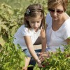 Healthy Lifestyle: Mother Helping Daughter Little Girl Pick Homegrown Vegetables
