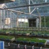 Figure 1.  The overview of greenhouse operation showing the growing tubs with the established sod and the drains for collecting leachate. Credit: Dr. Jinghua Fan