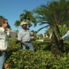 Stephen Brown, right, examines a king sago (Cyas revoluta) with Phil Wells, left, owner of PCL Landscape Management Inc. in Ft. Myers, and Joseph Green, an employee of the firm. UF/IFAS photo: Eric Zamora