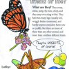 Insects: Friend or Foe? Color and Learn! coloring book