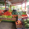 Figure 1. Fruit and vegetable stand on Krome Avenue in Homestead.