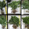 Figure 1. Whole plant samples of FL 1867 during the 2012 growing season at 41 DAP (A), 48 DAP (B), 54 DAP (C), 61 DAP (D), 75 DAP (E), and 90 DAP (F).