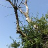 Figure 1. Dead branches pose threat to targets.