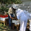 Figure 1. Backyard beekeeping set-up using hives with movable frames. Beekeeper has not exceeded the number of hives on this parcel. Hives are facing the fence, which acts as a flyway barrier.