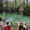children view manatees at a spring