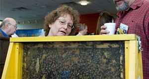two people looking at a demonstration beehive at Bee College