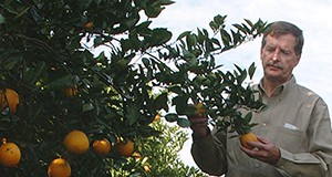 Extension agent checks an orange grove near Lake Alfred, FL. photo: Tara Piasio