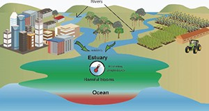 Figure 2. Nutrients and temperature act synergistically to stimulate blooms of harmful microorganisms in estuaries and nearshore ocean waters. Warming ocean waters caused by climate change are predicted to increase problems with blooms. Credit: Florida Sea Grant