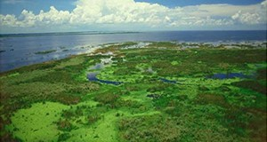 Figure 1. A photo of Lake Okeechobee, looking out over the western marsh region to the open waters of the large lake. Credit: SFWMD