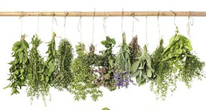 fresh herbs hanging to dry