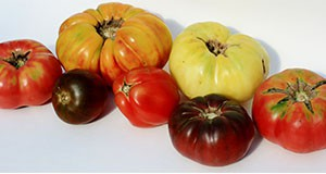 Heirloom cultivars exhibiting unusual shapes and colors that are becoming increasingly popular.