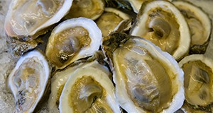 Raw oysters on ice. Oyster, shellfish, seafood, food safety. 2009 Annual Research Report photo by Tyler Jones.