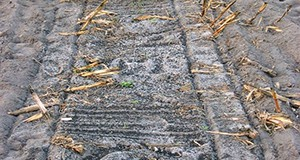 Class AA biosolids (black colored granules) land-applied to a corn field prior to planting.