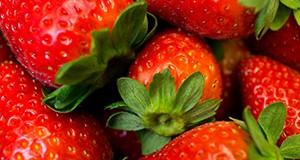 Freshly harvested strawberries.