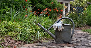 A watering tin and gardening gloves at a home garden.