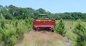 Applying poultry litter fertilizer to pines.