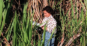 Rosa Muchovej, assistant professor with the University of Florida's Institute of Food and Agricultural Sciences, takes notes on growth of sugarcane near Clewiston. While most sugarcane is now grown on the area's organic muck soils, Muchovej and other UF researchers are developing new management practices to grow cane on less desirable sandy soil, thereby minimizing the environmental impact of sugarcane farming on the Florida Everglades.