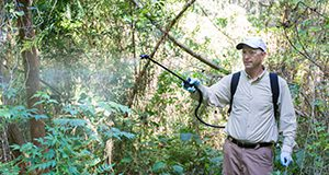 A single-nozzle backpack sprayer is useful for foliar treatment of many woody invasive plants.