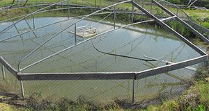 Bird netting over a production pond