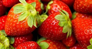Freshly harvested strawberries UF/IFAS Photo by Tyler Jones