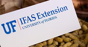 UF/IFAS Extension sign sitting on peanuts  Photo Credits:  UF/IFAS Photo by Amy Stuart