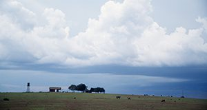 small farm in North Florida, sky, clouds, barn, cows,  beef cattle, trees, grass, pasture. UF/IFAS Photo: Thomas Wright.