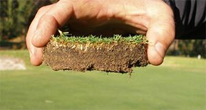 "Roots of nematode-damaged turf may appear ""cropped off"" an inch or less below the surface."