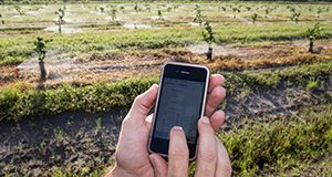 A farmer operating an IFAS-developed mobile app to control citrus irrigation.