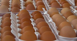 Fresh eggs at the farmers market downtown Union Street.