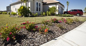 Florida home and landscaped yard with a car in the driveway. Home, driveway, garage, red SUV, palm trees, flowers, shrubs, house, yard, landscaping.  UF/IFAS Photo: Tyler Jones.