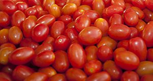 A bin of cherry tomatoes UF/IFAS Photo by Amy Stuart