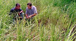 Donn Shilling and Eldridge Wynn look over a research field