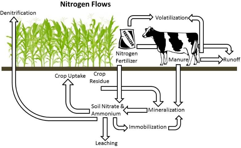 Managing Nitrogen Inputs and Outputs on a Dairy Farm