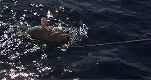 fish experiencing barotrauma