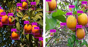 Real-time citrus detection using YOLO (a real-time AI object detection algorithm) on an NVidia Jetson TX2 board (Graphics Processing Unit, GPU). These results are achieved by using just 150 pictures to train the AI-based system.