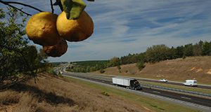 Turnpike, Oranges, Trees, Road, Semitrucks, Grass. UF/IFAS Photo: Josh Wickham