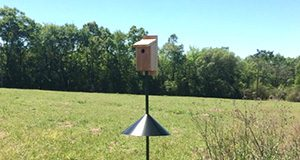 bluebird house Holly Ober, UF/IFAS