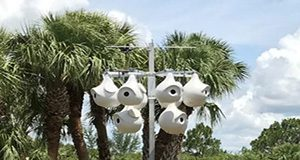 Purple martin housing should be located in open, grassy areas with no tall trees and should be mounted with a system that enables housing to be lowered for nest checks and maintenance. Photo by Pam Winegar.