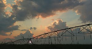 Citra, Pivot irrigation, sunset with clouds. UF/IFAS Photo: Josh Wickham