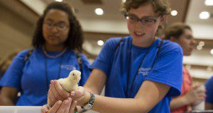 A 4H youth holding a baby chicken in her hands. Photo taken July of 2016.