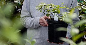 A woman holds a potted blueberry plant covered in blueberry flowers.