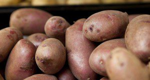 Red potatoes. Vegetables, food, nutrition. UF/IFAS Photo by Tyler Jones