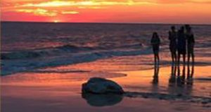A sea turtle on a beach at sunrise observed by four people standing at a distance.