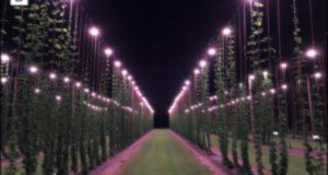 The UF/IFAS GCREC research hop yard in Balm, FL at night. Credits: Shinsuke Agehara, UF/IFAS
