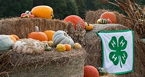 Squash and pumpkins on hay bales, with the 4-H banner. Squash, pumpkins, 4-H, hay, gourds, corn, fall. UF/IFAS Photo by Tyler Jones.