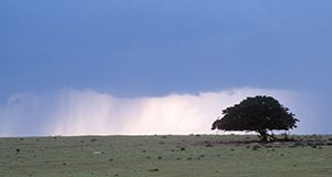 Storm rising over a farm.